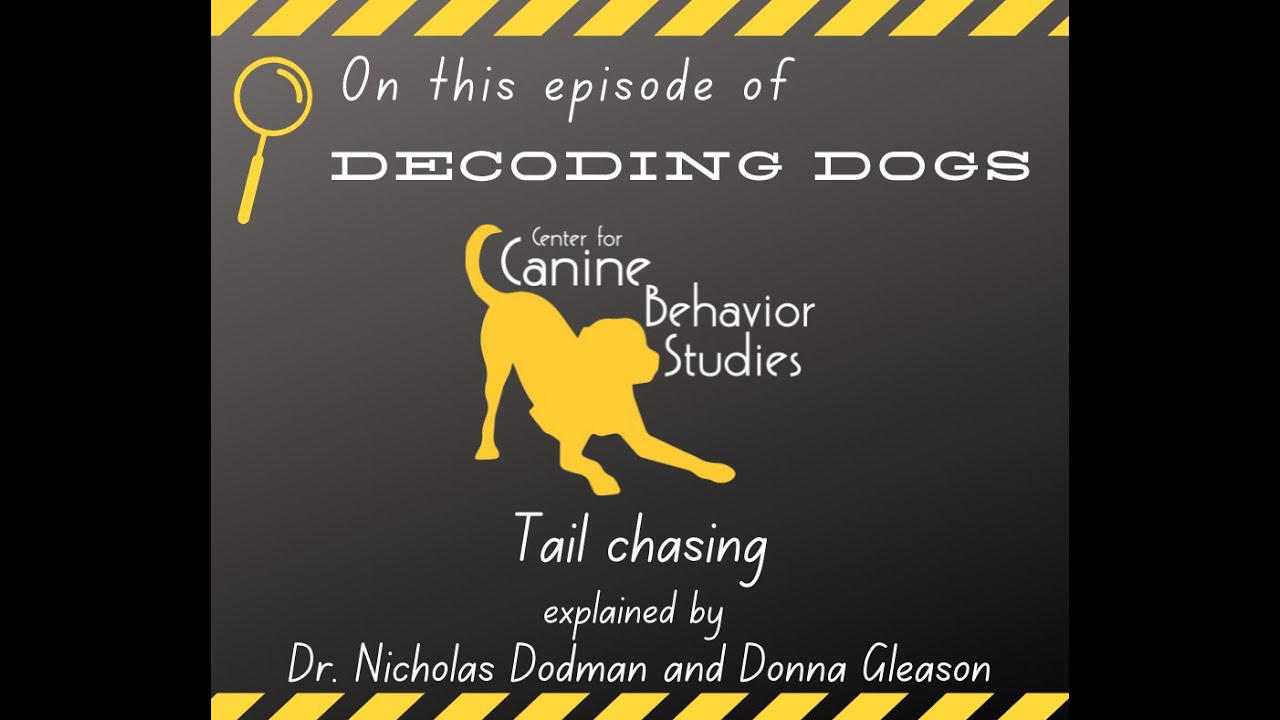 Decoding Dogs: Tail Chasing