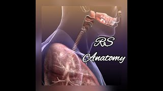 RS - Anatomy - LEC4 (ABCD)