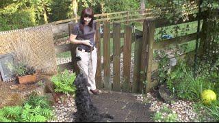 Dex, Goldendoodle Puppy Training, Day 5: Off Leash Recall, Sit, Wait, Place, Swim
