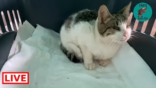 A friend call me about a blind cat in the streets trying to find food in the rubbish  Takis Shelter