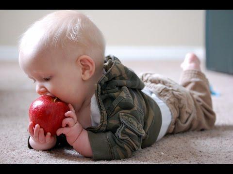 Яблоки. Полезные и целебные (лечебные) свойства яблок. Чем