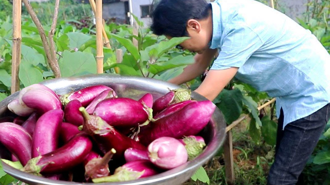 九九大太阳天去地里摘茄子,一篮子做不出货来,但油茄子好吃也值了!【湘西九九美食】