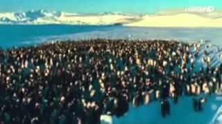 Björk - Aurora