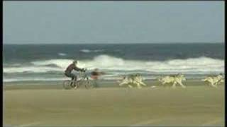 Guinness World Record Fastest 100 metre Dog Sled on Sand