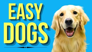 Top 10 Easiest Dogs To Own ( Low Maintenance Dog Breeds )