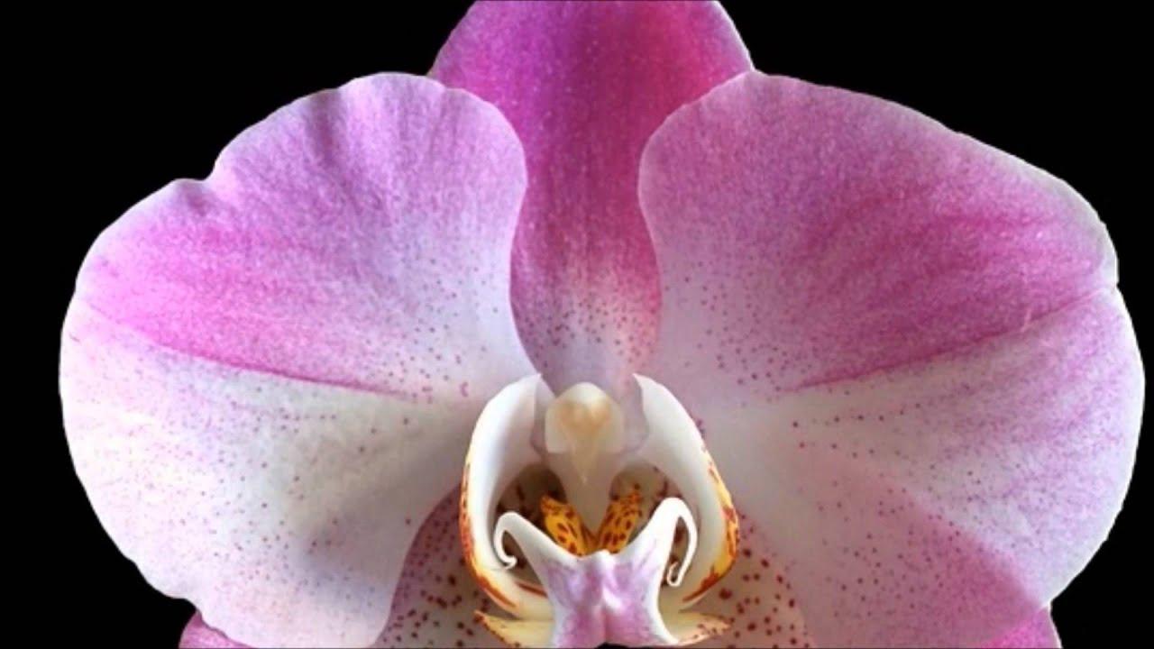 Las flores mas comunes y sus nombres para ni os youtube Nombres de plantas comunes