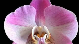 Nombres de flores exoticas para niña