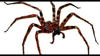 Cutanea araña erupcion por picadura de