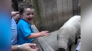 طفل تظهر الحب للحيوانات ★ تغذية الطفل الحيوانات | فيديو مضحك وفشل