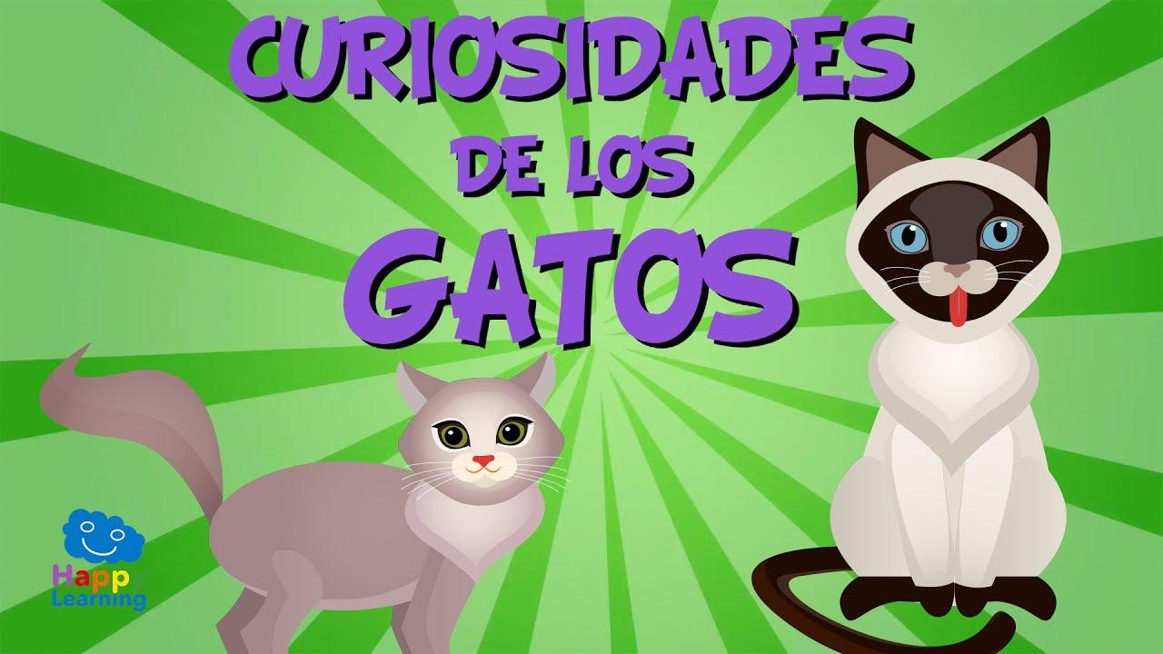 Curiosidades de los Gatos   Videos Educativos para Niños. - YouTube