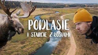 Baixar Podróże po Polsce! Niesamowite PODLASIE i wielkie poszukiwanie ŁOSI! 🔎🌲🌲🌲