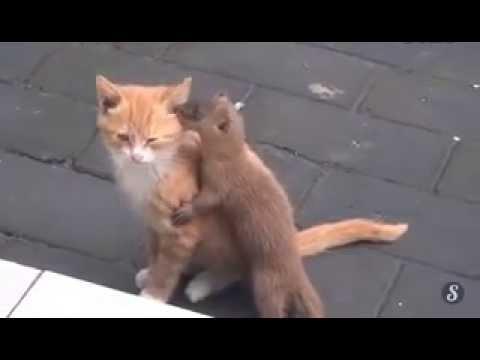 Amiti entre un chat et une belette au japon youtube - Babouin et belette ...