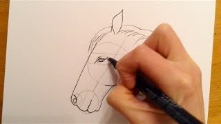 Beginners Lesson - How To Draw A Horse