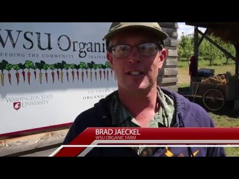 Tekoa School Teachers Visit the WSU Organic Farm