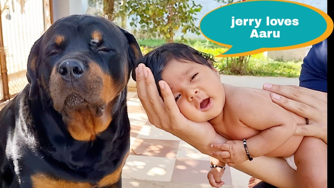 My Baby Aaru is very happy with my dog Jerry||well trained dog.