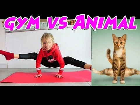 Challenge GYM vs ANIMAL