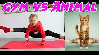 Challenge GYM vs ANIMAL