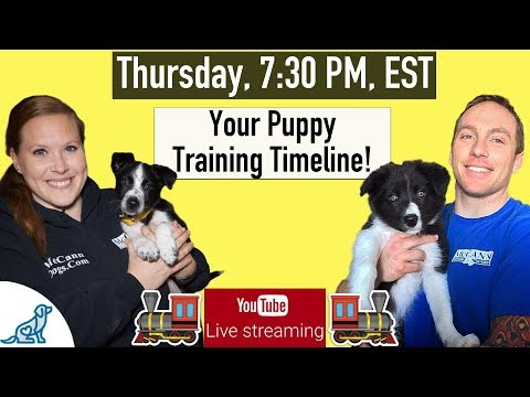 Puppy Training Schedule Week By Week - Professional Dog Training Tips