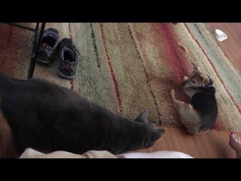 Toonie vs Sammy: dog vs cat