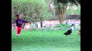 Wild Duck Chase