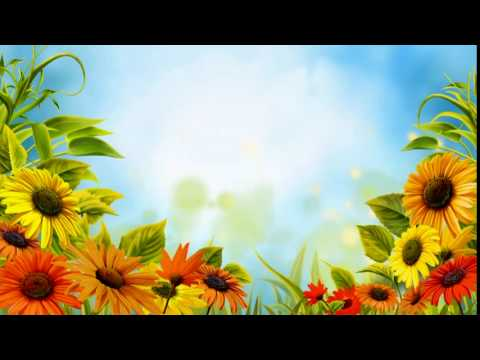 Free HD Wedding background, Free download motion background, Free video FLOWER 002 thumbnail