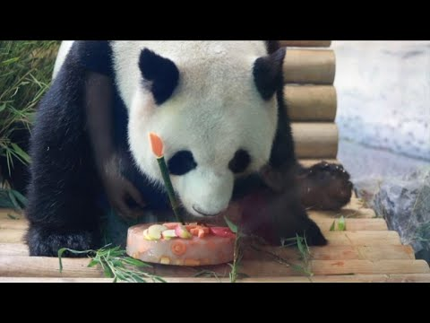 Panda gets special birthday cake at Berlin Zoo