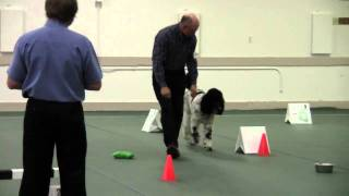 Cantope Poodles Rally Obedience Penny Run #2.wmv