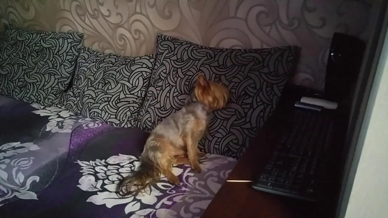 Фотография на тему Деловая женщина спит, сидя за компьютером ... | 720x1280