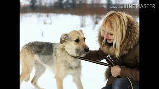 Грустный стих о собаке до слёз