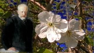 Tschaikowsky - Blumenwalzer Nussknacker Suite - Nutcracker Suite - Tschaikowsky Waltz of the Flowers