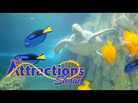 The Attractions Show - Turtle Reef at SeaWorld San Antonio; Monster Jam World Finals; latest news from YouTube · Duration:  22 minutes 9 seconds