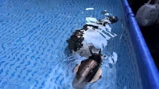 東工大・広瀬研究室 水陸両用ヘビ型ロボット ACM-R5