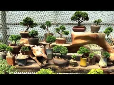 제16회 와송 박을순여사 철쭉분재,분경,야생�