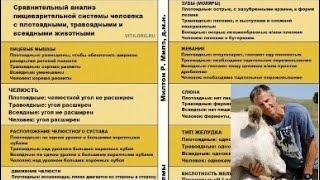 Анализ пищеварительной системы человека с плотоядными, травоядными и всеядными животными.