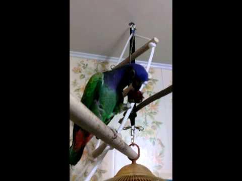 попугай Григорий.