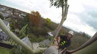 Tree removal in Christchurch - Qualified, Efficient, Professional Tree service's!