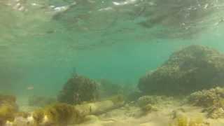 Mommotti 115 SS y Buginu Bíu 105  bajo el agua