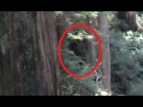 Bigfoot Smashes Barrel Like A Beer Can