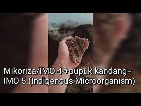 Cara Fermentasi Pupuk Kandang, Mikoriza, Trichoderma