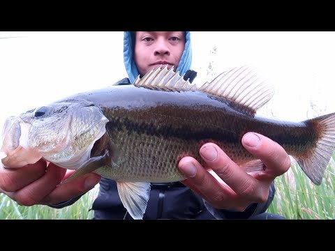 NON-STOP Topwater Bass Fishing Near Vancouver BC -- My Favorite Lure