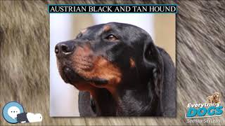 Austrian Black and Tan Hound  Everything Dog Breeds