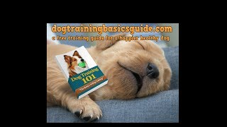Searching for dog training Carrollwood FL? visit dogtrainingbasicsguide.com