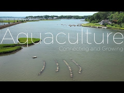 CT Aquaculture | UConn