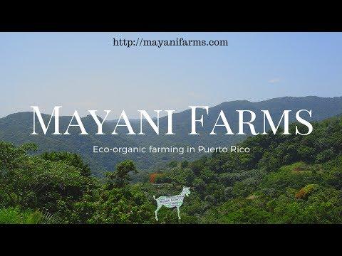 Mayani Farms | Eco-organic farming in Puerto Rico