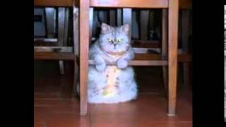 лучший корм для кошек отзывы