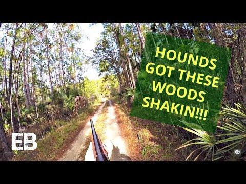Deer Dog Drive - Hounds Got These Woods Shakin'!!!