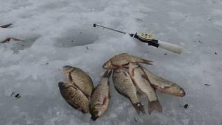 Рыбалка Зима 2017 2-й пруд в с.Береговое (Прохоровка) 25.02.2017