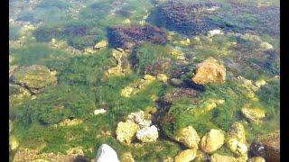 Море Порковое пляж 2020
