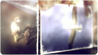 The Wayward Gifted - Trailer