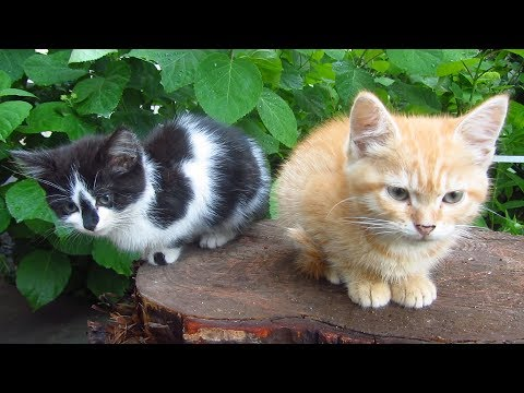 New four kittens with tortoiseshell cat